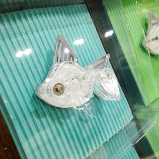 金魚01.jpg